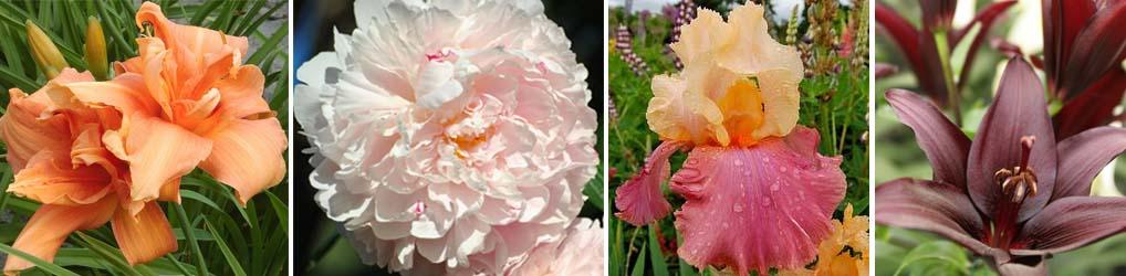 composti fiori1